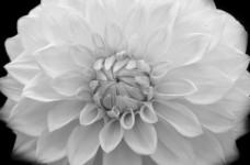 flower-1381090054AuQ